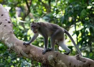 jungle of bali