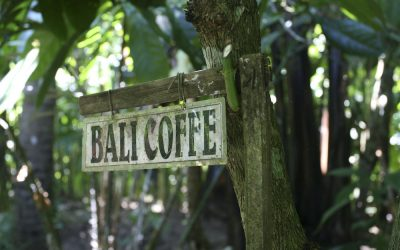 Did You Know This About Luwak Coffee?